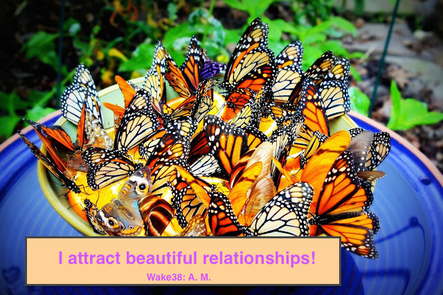 butterfly-food