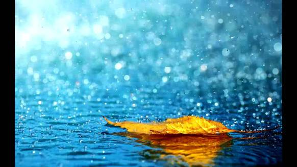 wake38-rain