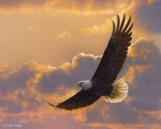 eagle-w38